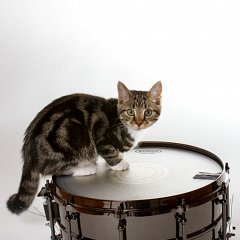 The official Schinbein Drum Company Mascot, perched on a snare